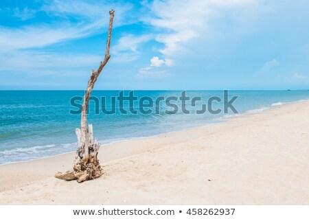 drogen · hout · strand · vakantie · tijd · zee - stockfoto © vapi