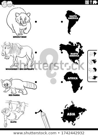 Gyufa állatok kontinensek feladat szín könyv Stock fotó © izakowski