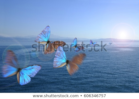 Stok fotoğraf: Birkaç · kelebekler · beyaz · bahar · soyut · arka · plan