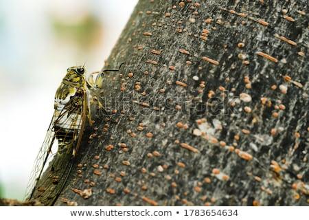 cicada slough Stock photo © smithore