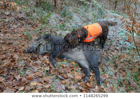мертвых кабан собака вечеринка охота игры Сток-фото © cynoclub