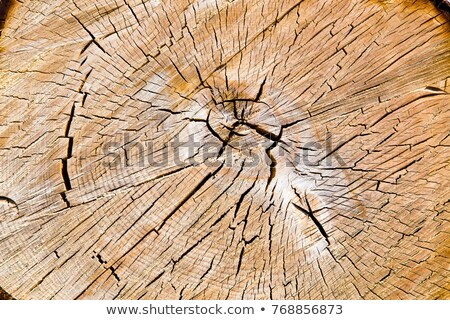Newly Cut Logs Stock photo © Kacpura