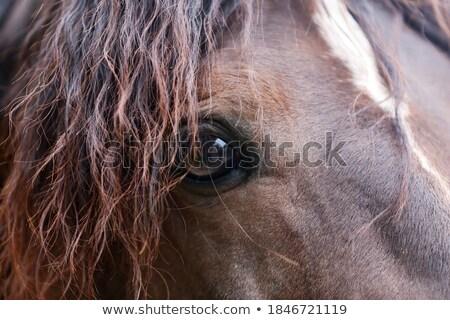 Colt and horse Stock photo © Elenarts