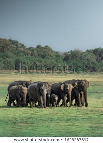 Olifanten voldoen ander twee Stockfoto © timwege