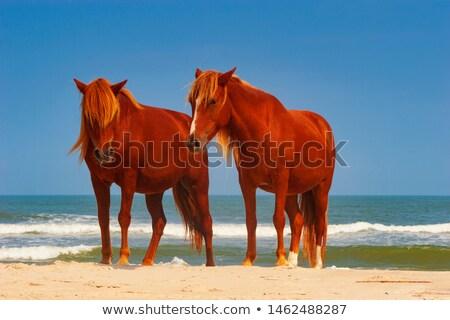 Póni trekking homokos tengerpart kilátás gyönyörű tengerpart Stock fotó © morrbyte