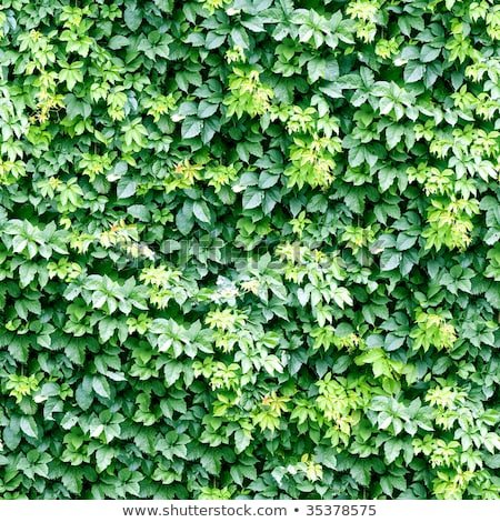 Klimop naadloos textuur bloem voorjaar abstract Stockfoto © tashatuvango