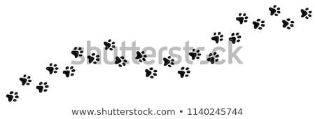 Foto stock: Gato · pegada · europeu · lama · mão · humana