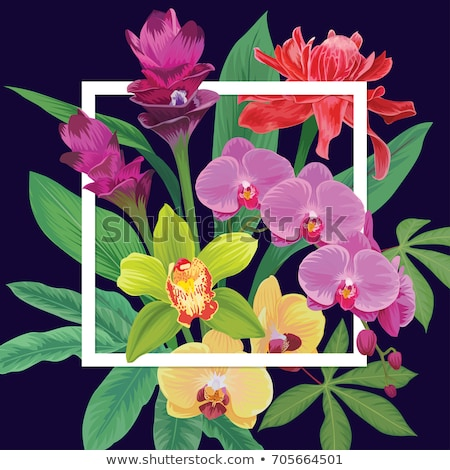 siam tulip flower or curcuma alismatifolia stock photo © stoonn