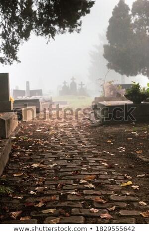 Three tombstone crosses. Stock photo © d13
