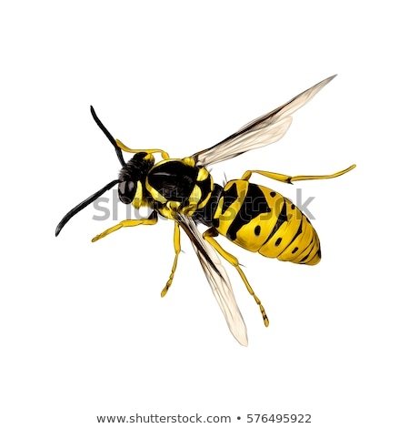 Stock photo: Flying Wasp