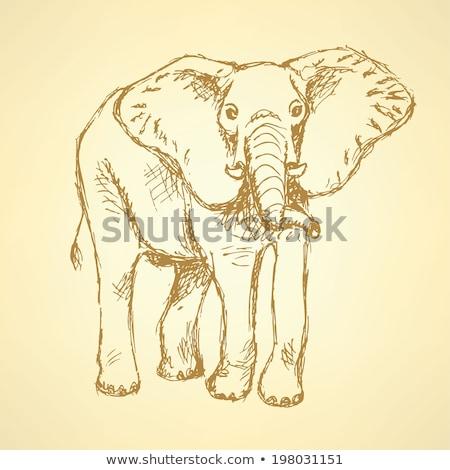 красивой · африканских · животного · иллюстрация · большой - Сток-фото © kali