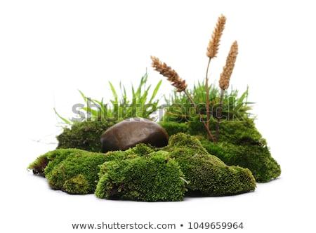 草 石 孤立した 白 葉 健康 ストックフォト © natika
