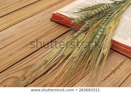 Kukorica fül recept könyv oldal érett Stock fotó © stevanovicigor