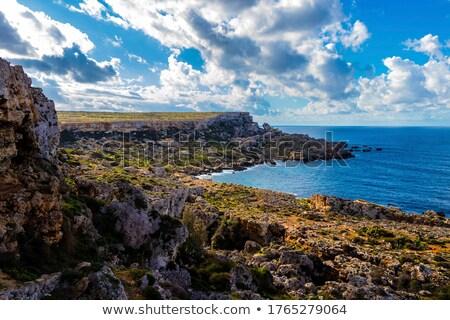 типичный природы Мальта высушите зеленый испанский Сток-фото © compuinfoto