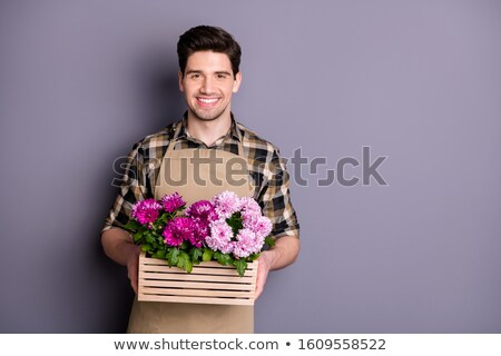 man hand holding a flower pot with chrysanthemum flowers, with a Stock photo © nito
