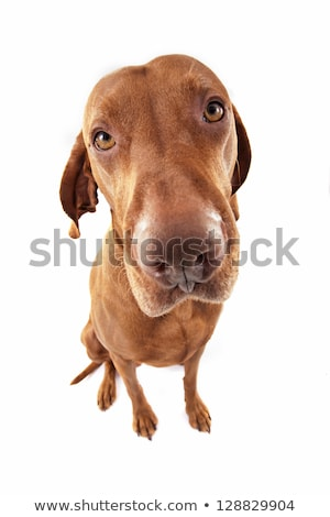 Сток-фото: Ultra Wide Angle Dog Portrait
