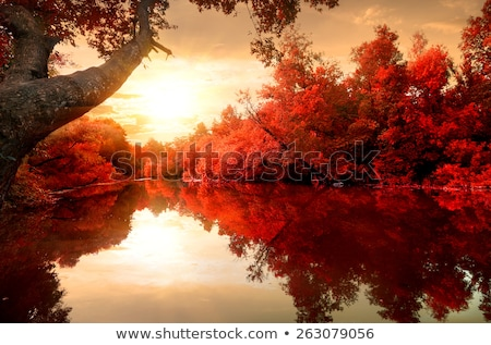 Stock fotó: Fák · tó · ősz · színes · levelek · égbolt