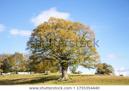trees and fields in autumn stock photo © w20er