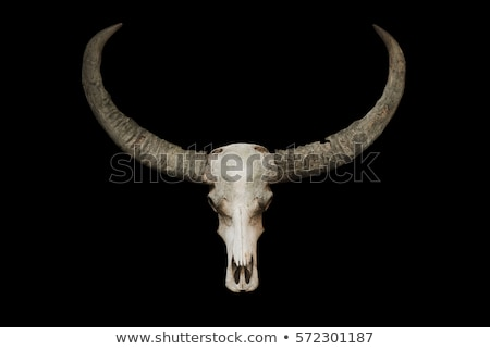 skull with the horn in black and white stock photo © hunterx