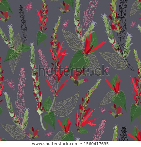 Red Sage plant in summer Stock photo © LianeM