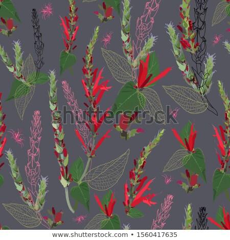 Rood salie plant zomer natuur Stockfoto © LianeM