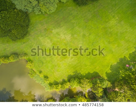 Beautiful view of the green field Stock photo © bluering