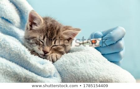 veterinário · pássaro · cão · gato · médico · médico - foto stock © lightsource