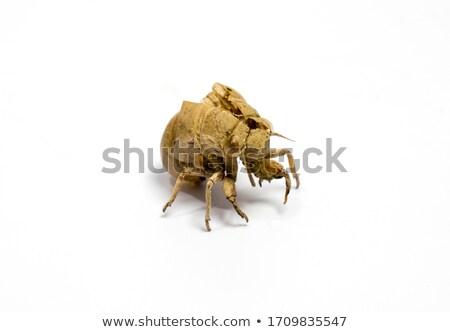 verano · insectos · maravilloso · sonido · caliente - foto stock © njnightsky