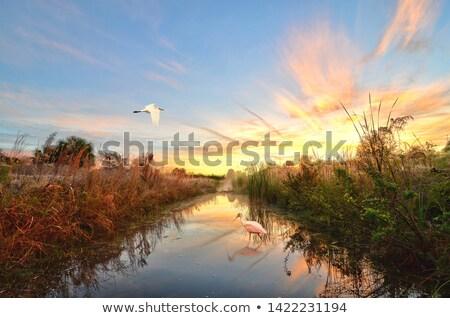 magnifique · blanche · héron · forêt · arbres · sunrise - photo stock © Joseph