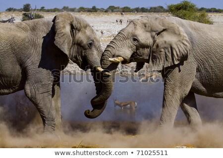 elephants fighting in the  Etosha national park  Stock photo © meinzahn