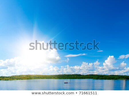 tree in park with blue sky and water reflexion 