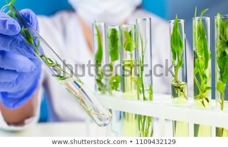 Növény kémcső kezek tudós orvosi élet Stock fotó © JanPietruszka