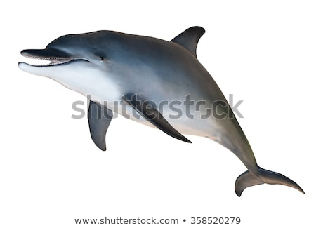 Gray dolphin on white background Stock photo © bluering