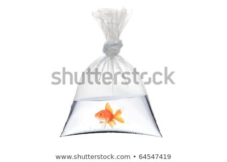 Peixe-dourado plástico saco Foto stock © IS2
