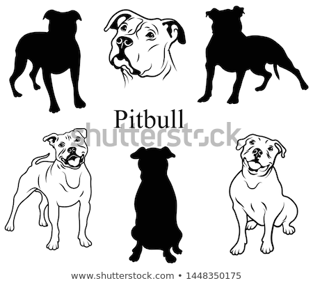 A pitbull and bone Stock photo © bluering