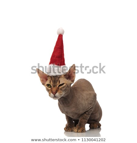 curious metis cat with santa hat looks to side Stock photo © feedough
