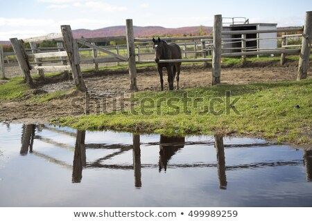 horse behind a wooden fence with water reflexion Stock photo © Lopolo