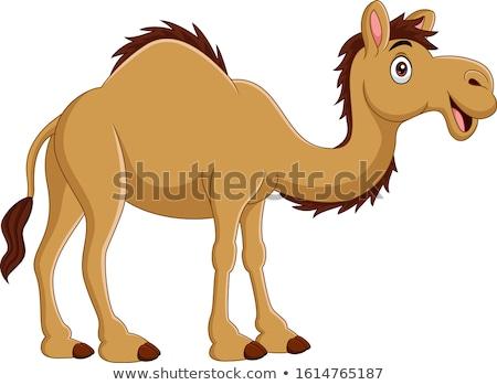 улыбаясь Cartoon верблюда иллюстрация Сток-фото © cthoman