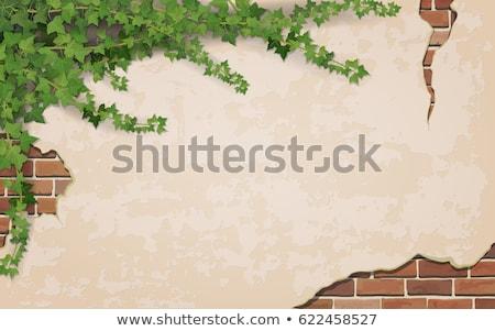 ivy leaves on old vintage wall stock photo © dariazu