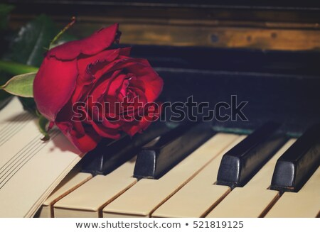 Love song with red rose Stock photo © Eireann