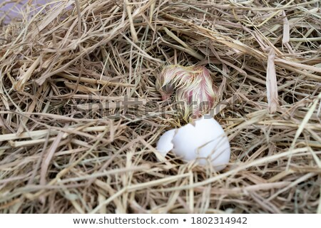 Cute chick was born 1 Stock photo © liolle