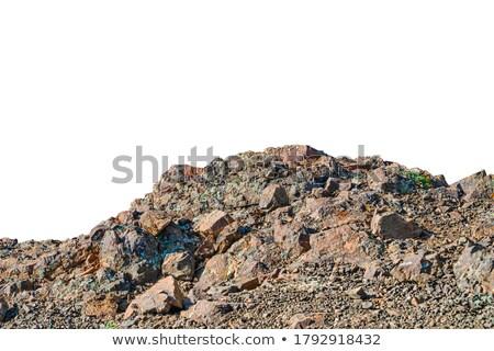 Charakter pierwszy plan skał ilustracja drzewo trawy Zdjęcia stock © bluering