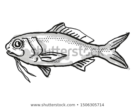 Berndt's Beardfish Australian Fish Cartoon Retro Drawing Stock photo © patrimonio