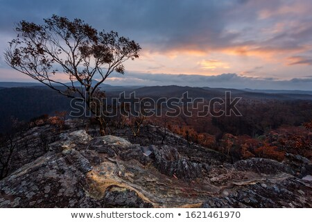 Sunset over charred landscape after bush fires in Australia Stock photo © lovleah