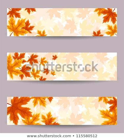 színes · őszi · levelek · eps · vektor · akta · erdő - stock fotó © beholdereye