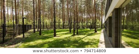 óriási zöld fű kilátás fenék Stock fotó © alrisha