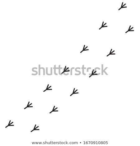 bird footsteps Stock photo © milsiart