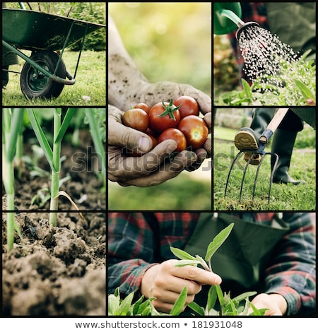 Life on the farm collage Stock photo © photography33