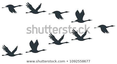 siluet · kaz · arka · plan · siyah · özgürlük · beyaz - stok fotoğraf © perysty