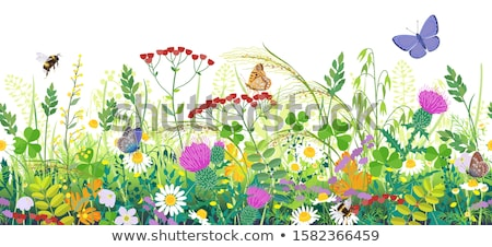 motley butterflies and white flowers spring background Stock photo © marinini